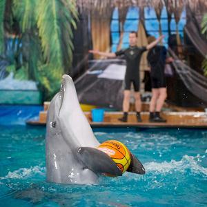 Дельфинарии, океанариумы Дубков