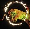 Цирки в Дубках