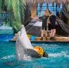 Дельфинарии, океанариумы в Дубках